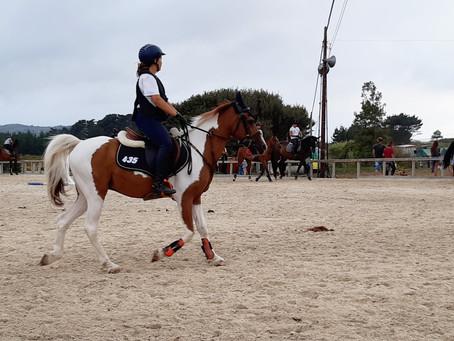 Espectacular incremento de ponis en la nueva edición de Equiocio Mar y Tierra