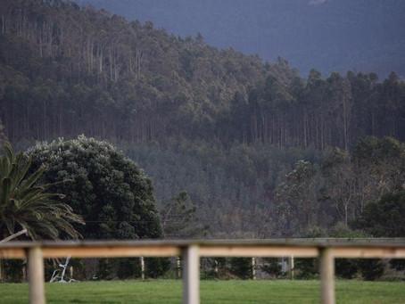 Equiocio inaugura su calendario 2020 con la plantación de un jardín botánico en Covas