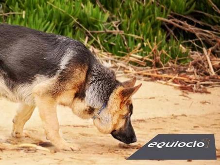 Equiocio premia el cuidado de las mascotas