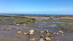 Low tide and rock pools!
