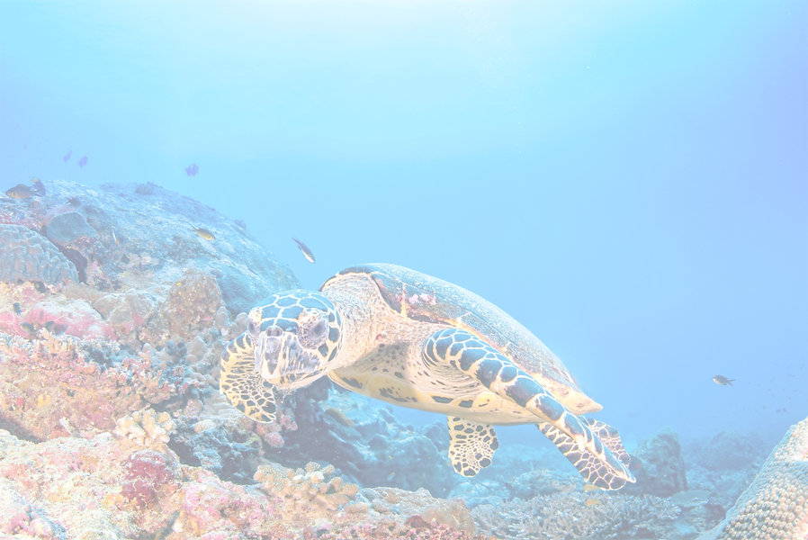 Turtle%20in%20the%20Reef_edited.jpg