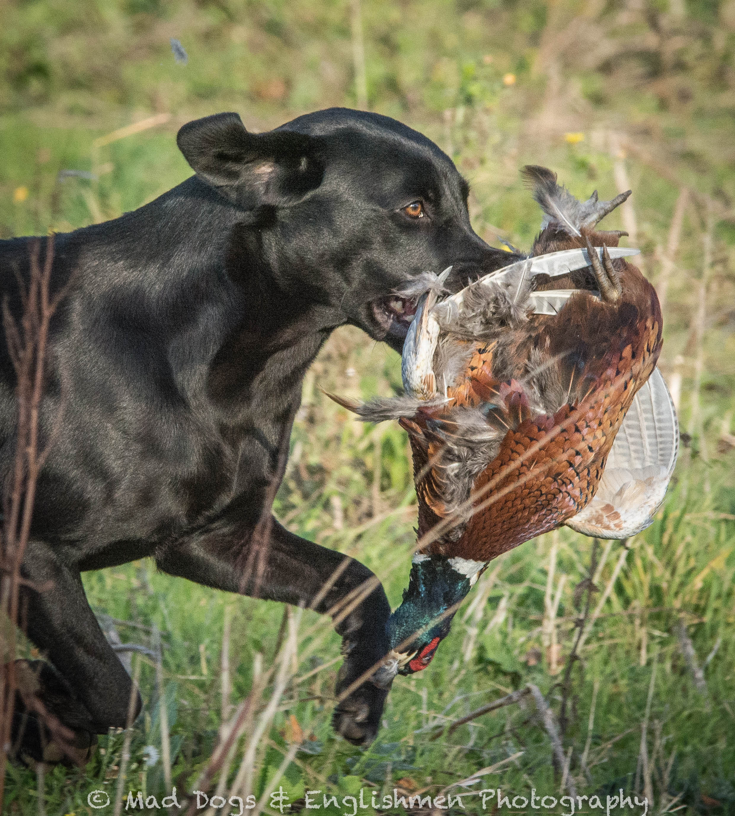 Open Retriever Trial 2014