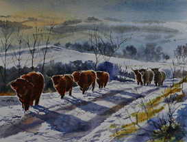 Highland cows - SOLD