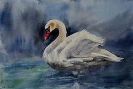 Lathkill swan