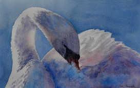 Preening swan - SOLD