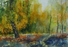 Birches at Padley Gorge