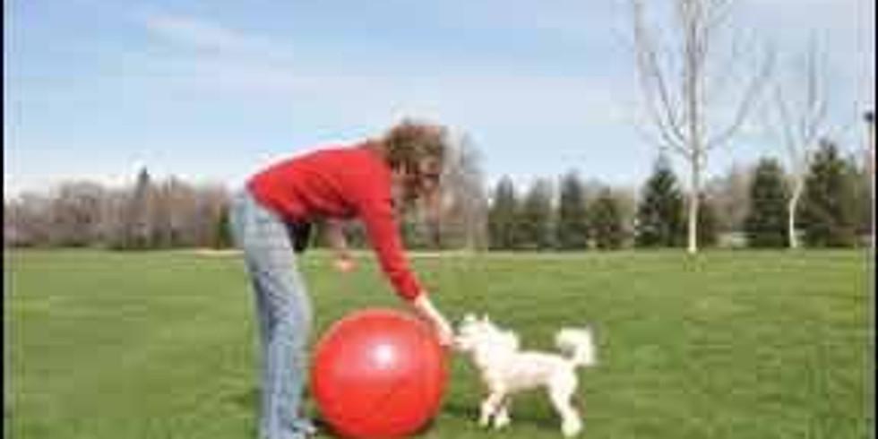 Initiation Treibball (1)