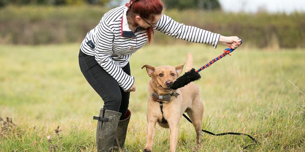 Jeu de balle (tug/bâton), prédation et santé avec mon chien
