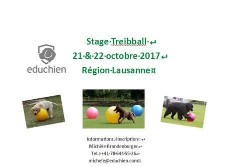Stage de Treibball en octobre