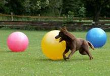 Education canine Vaud, education canine Yverdon,  formation chien detection de punaise de lit, Treibball, Tricks