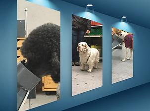 Montage-photos-chiens-mib.jpg