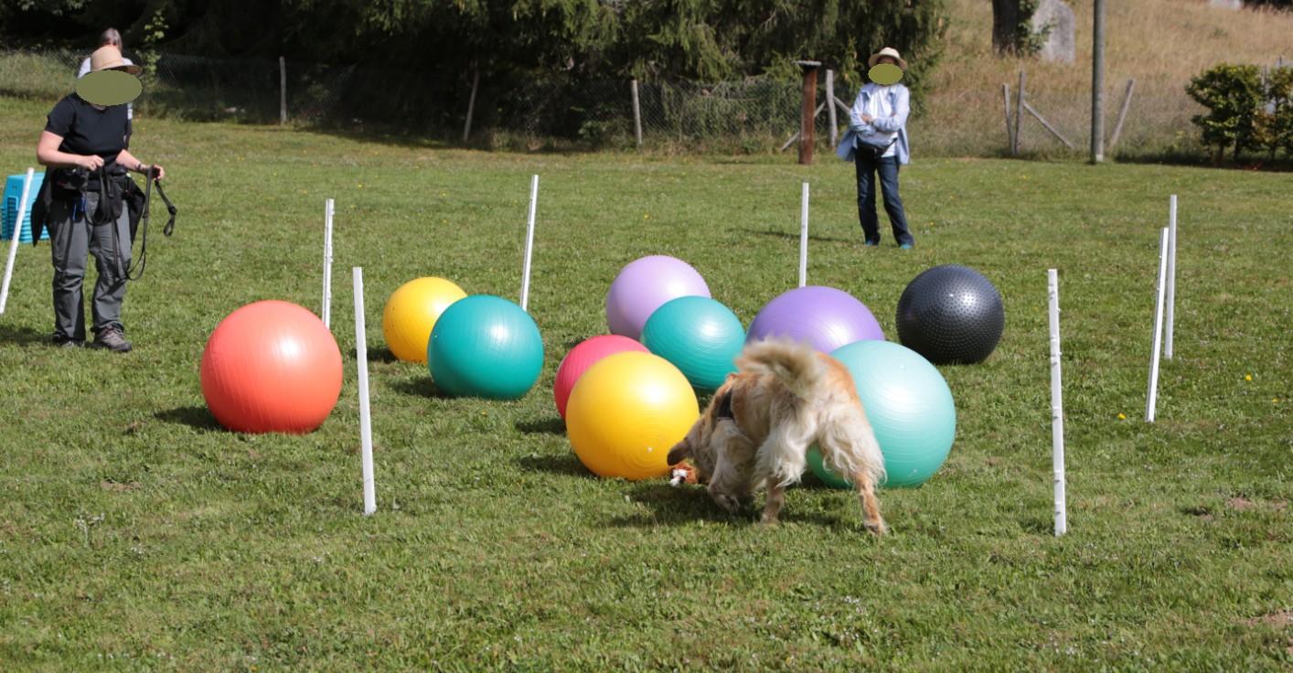 Initiation Treibball