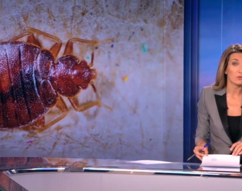 TF1-punaises-proliferation