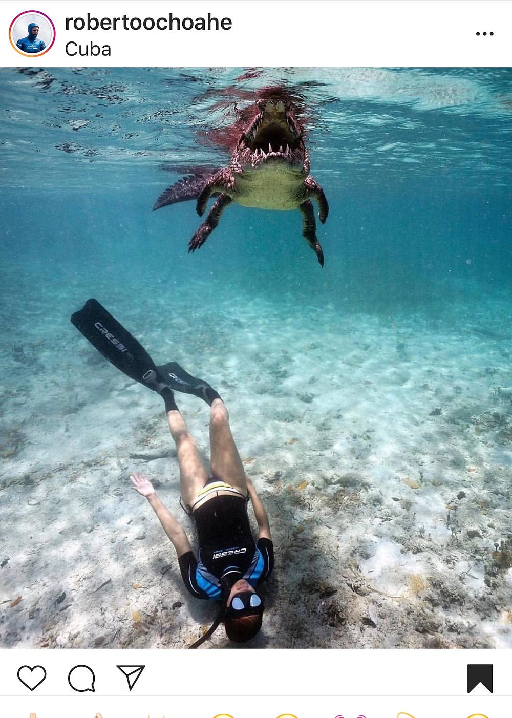 crocodile photograph