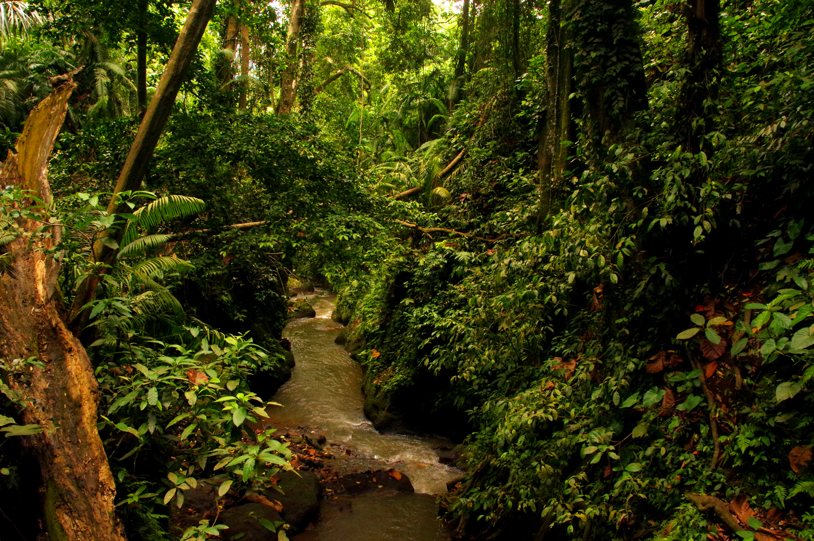 rainforest-banner