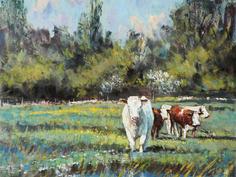 Buttercup Meadow, early summer