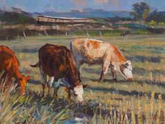 Cattle, evening light, Halvergate