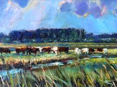 Cattle on the Marsh, Halvergate