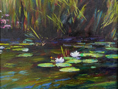 Water lilies & Reflections