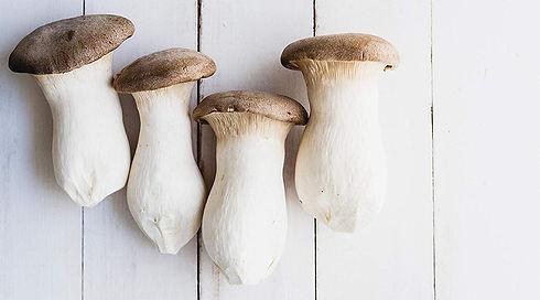 mushrooms spawns.jpg
