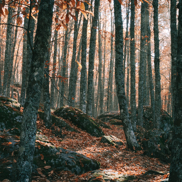 Lush Fall Forest