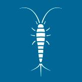 Larvas de Mosquitos