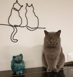 חתולים גדול - שחור
