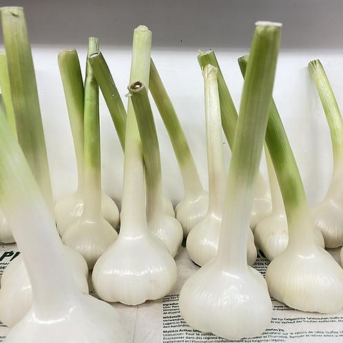 Garlic Fresh