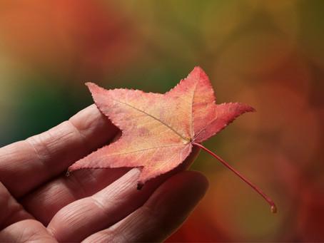 A Gentle Ayurvedic Detox for Fall
