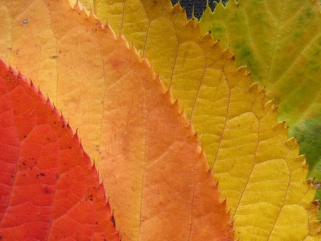 Ayurvedic Diet & Lifestyle for Fall