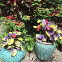.Fairy Gardenpng