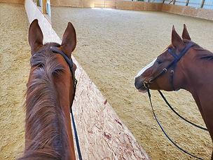 LiteMirror Colorado Horse.jpg