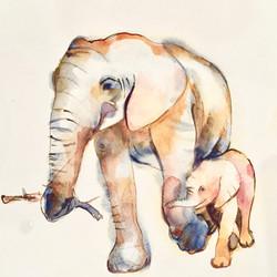 Elephants SOLD