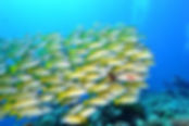 Monterery Bay Aquarium
