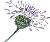 thistle background free.png