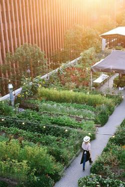 Urban Farm Organization Feel (7)