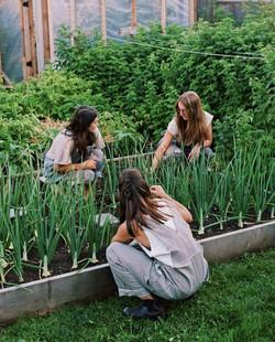 Urban Farm Organization Feel (4)