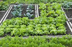 Urban Farm Organization Feel (1)