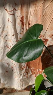 Throwing sheet & split leaf
