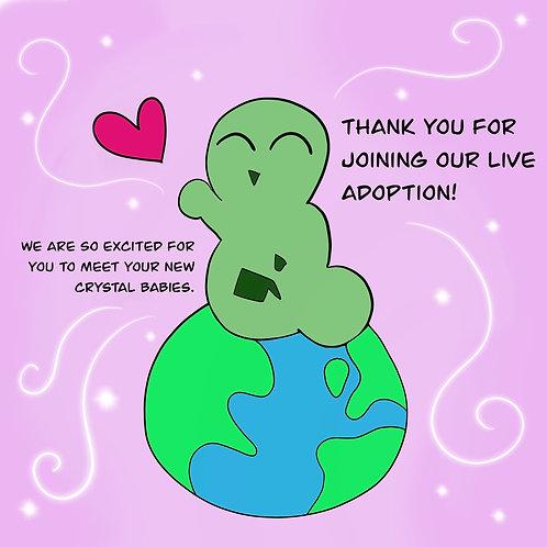 Canderella's Adoption