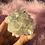 Thumbnail: ✧ Shimmer ✧