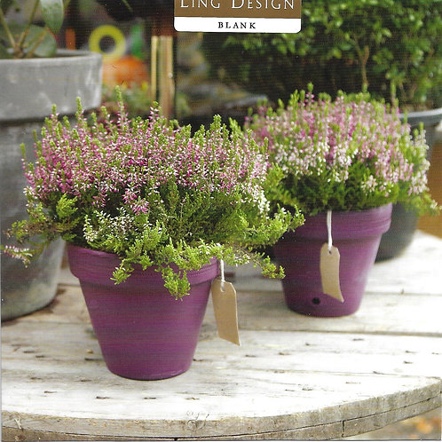 Pink Flowers in Plant Pots Square 16cm Blank Greetings Card