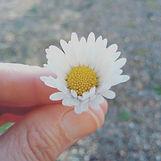 vegan daisy flower