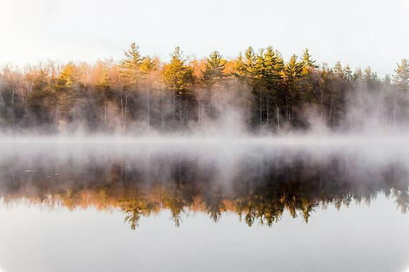 Misty Spring Pond