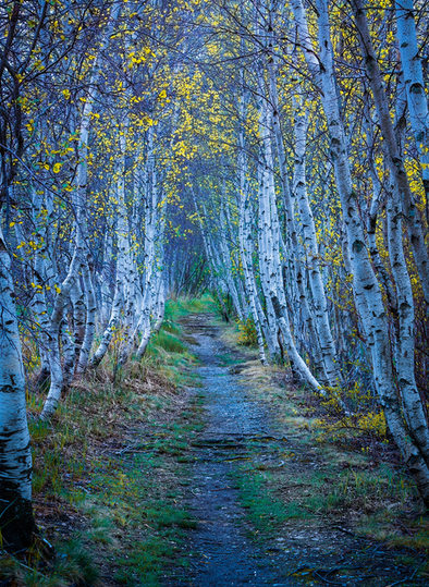 Jesup Path.