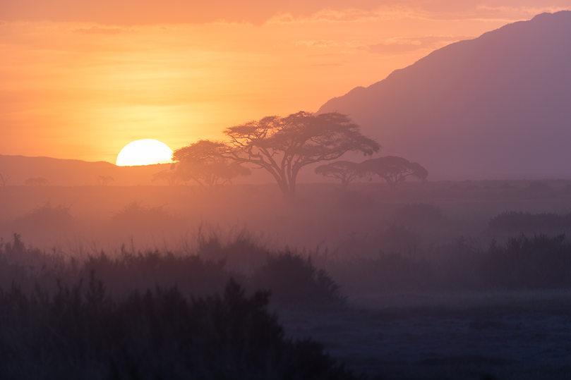 The Sun Dips Behind the Acacia