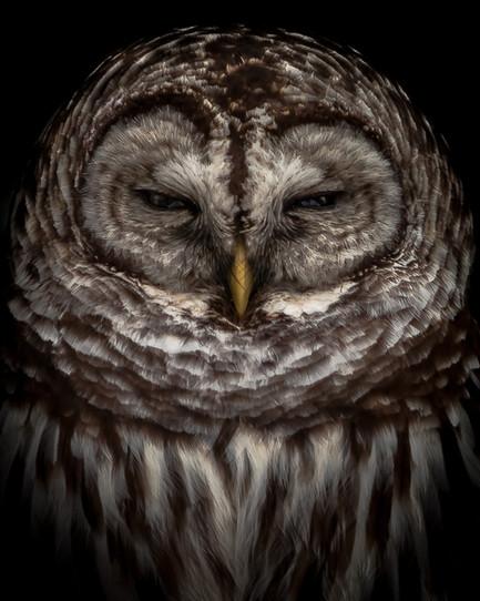 Eyes of a Hunter.