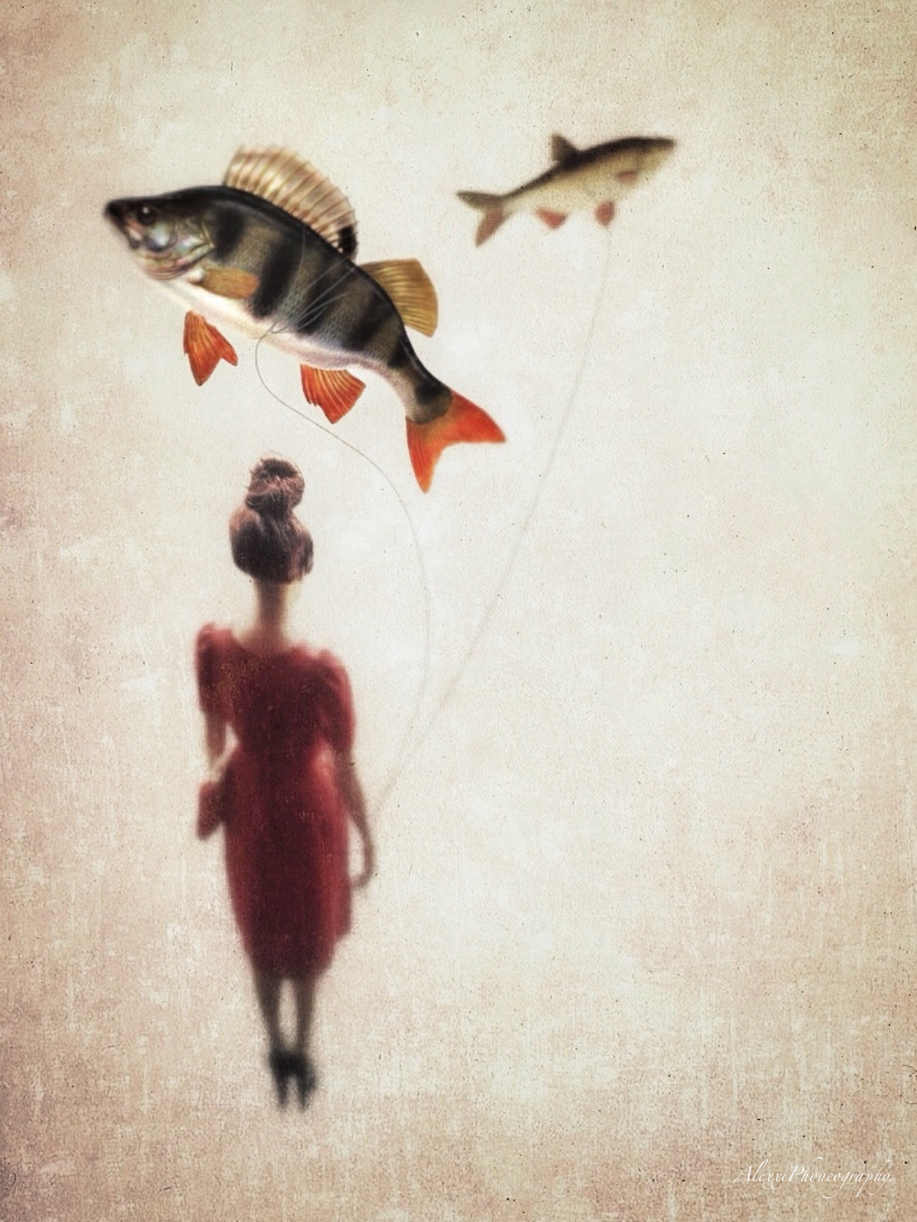 Two fish, two ideas (iPhoneography)..JPG