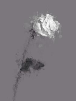 The White Rose.JPG