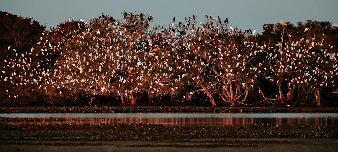 Nhecolandia, Pantanal